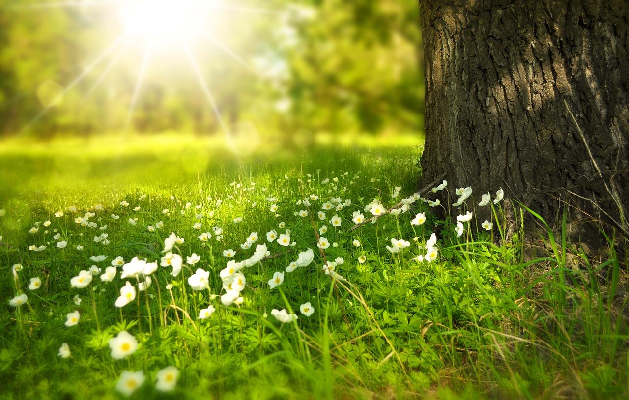 Spring activities for dementia patients